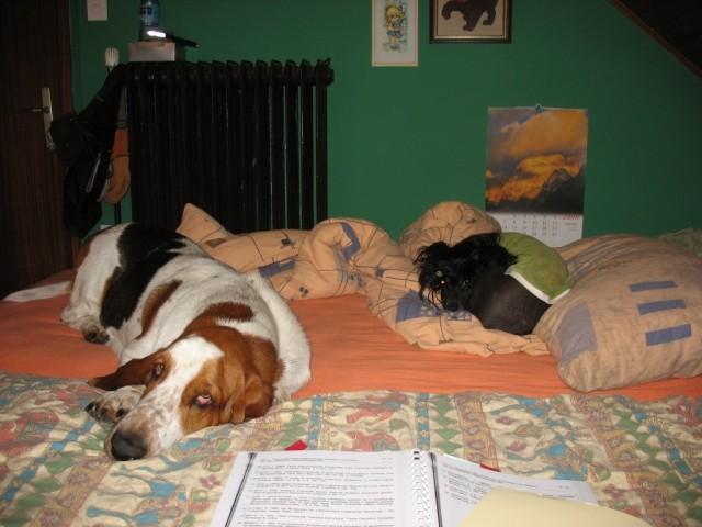 Hubi in Lin...težko pasje življenje...poležavanje do kosila :)