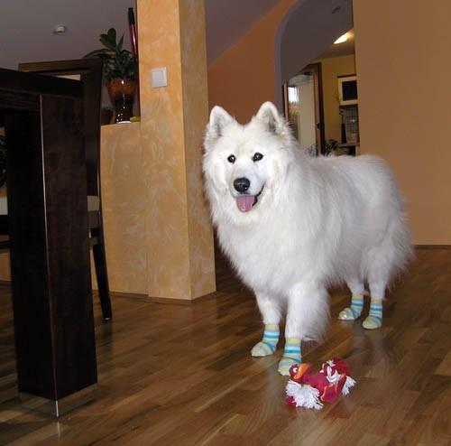 Bela z novimi nogavicami :) - foto povečava