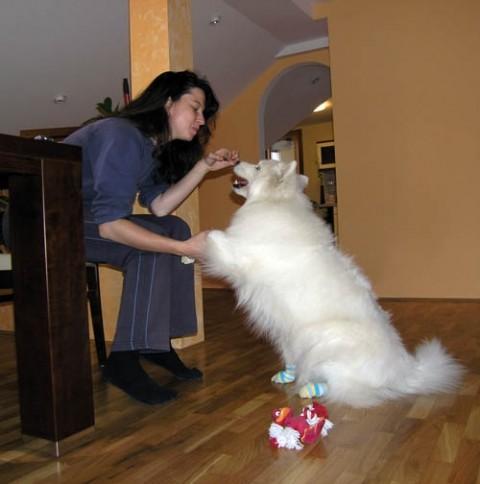 Bela z novimi nogavicami :) - foto