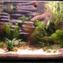 Akvarij 130l, 3 dni po postavitvi