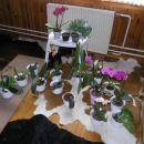 En del moje zbirke orhidej