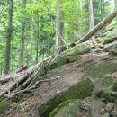 Na nekaj mestih so spet vidni sledovi narave, ki ob močnejšem deževju v teh strmih pragozd