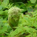 Še en zanimivi cvet ob poti. Podrobno opazovanje okolice razkrije še marsikakšno podobno r