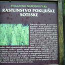 Po nedolgem blagem vzponu nas pričaka še tabla, ki nas opozori na pestro rastlinstvo v Pok
