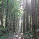 Jutranje sonce skozi sveti skozi gozd