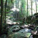 Divja narava Bistriškega Vintgarja