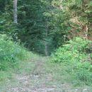Pešpot na koncu gozdne ceste