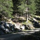 Prečkanje gozdne ceste