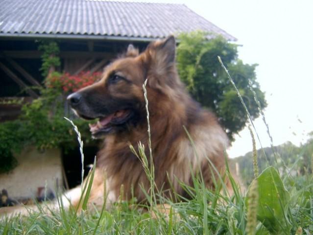 Ron (16.10.1994-9.8.2007) - foto