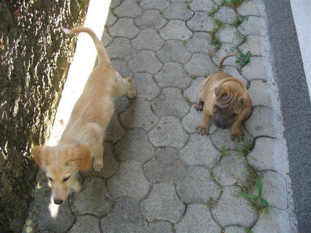 Tai & Shaya - foto