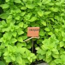 zeliščni vrt - tablica iz das mase