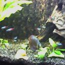 moje ribe