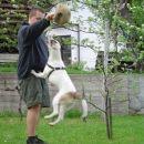 Dej mi žogo!