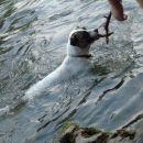 Jst znam pa plavat!