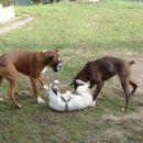 Frigga, Tyson in Pago 2