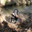prinašanje iz blatnega potoka