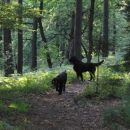 Gozdna duhca