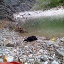 Glej, glej reka je naplavila enega flatkota...zoom...