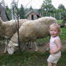 pa še ovčke
