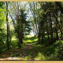 sprehod po gozdu iz planine Kuhinja do Planice