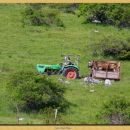 vožnja krav v planine