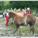 Konji na planini Kašina