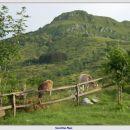 Krave za kočo - v ozadju Kožljak