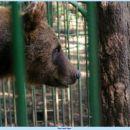 medo je zaprt pri lovskem domu v završnici