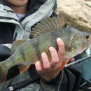 ribolovuznas