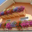 bogastvo cvetja v juliju 2008