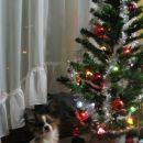Božične 2006