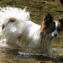 Sprehajanje po vodi