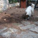 Prekopavanje dvorišča