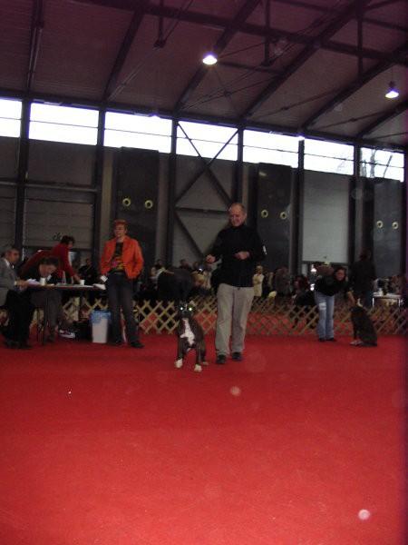 CACIB Tromostovje, jan.2008 - foto