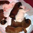 7 malčkov