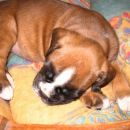 Daisy je zaspala, 3.teden