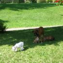 Igramo se na travi z mamico