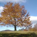 Jesen na Kalu