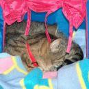 Muca Joška... najbolj retardiran maček na svetu!
