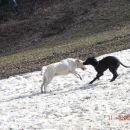 Še zadnji utrinki na edini fliki snega na Pohorju!