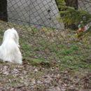 Poglej, kokoška!