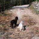 Kam greva, Luna? :)