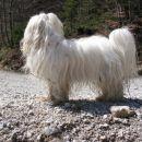 Potočni pes, drugič:))