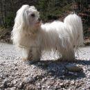 Potočni pes:)