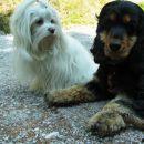 Šia in Luna, zadnjič:) Info: tjasa.sia@gmail.com  www.maltezan.net