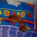 Goldy pred spanjem:)