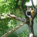 Otroci so večinoma zelo spretni in zelo radi plezajo na drevesa.