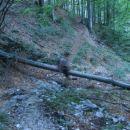 razcep: pot se odcepi od poti na kamniško sedlo.
