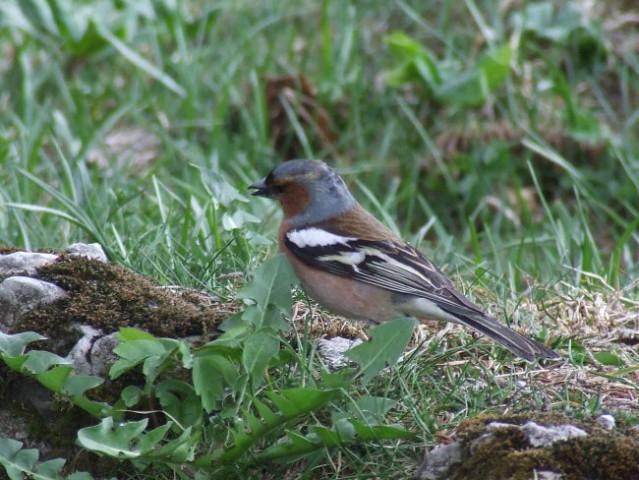 Ptiček, ki nama je ob poti prepeval ...
