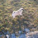 Uživam na travniku .